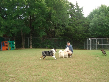 Lg Dogs The Four Paws Resort Dog Boarding Kennel In